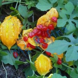 Planta Cundiamor - Fresh...