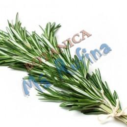 Planta Romero - Fresh Herb...