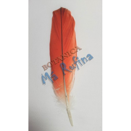 Natural Red African Grey Parrot Tail Feather 1 Piece